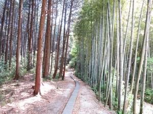 1505fusimi-aoki_34 - コピー