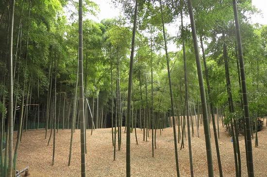 伏見の竹林