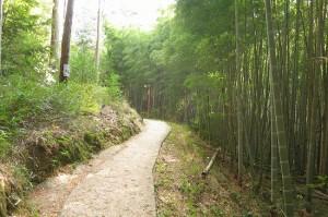 kyoto-take_12