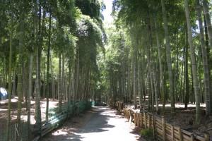 京都伏見稲荷、青木の滝