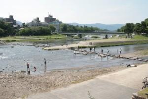 京都鴨川で水浴びしています。