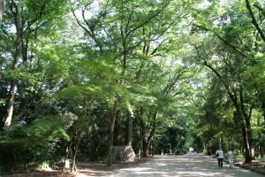 kyoshimo_64