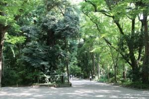 kyoshimo_65